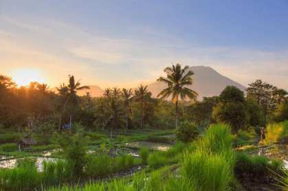 Bali five
